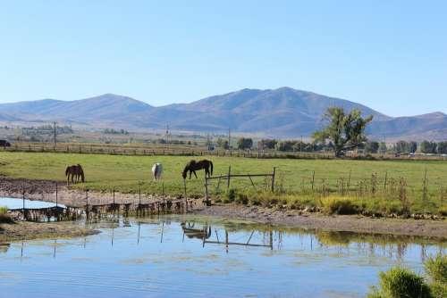 Horse Ranch Rural Farm Animal Brown Mare Pasture
