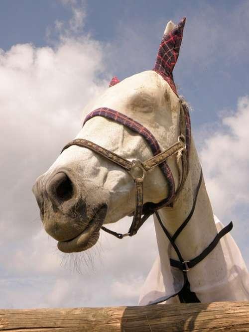 Horse Saddle-Cloth White Portrait Head Fly Mask