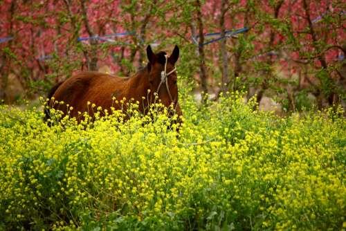 Horse Flowers Flower Color Nature Colors