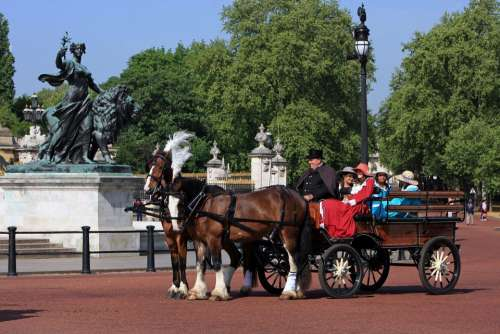 Horse And Carriage Carriage Horse Horses London