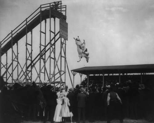 Horse Diving Vintage Jumping Tower History Horse