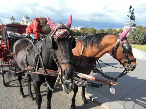 Horse Drawn Carriage Vienna Austria Coach Horses