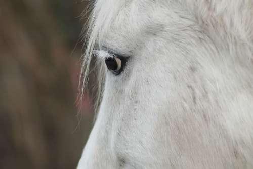 Horse Head Horse Mold Portrait Horse Eye Friendly