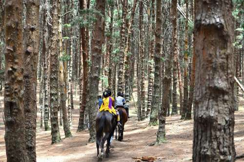 Horseback Riding Equestrian India Pine Trees Forest