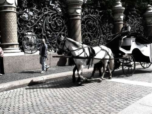 Horses Cart Controllers Peter Russia