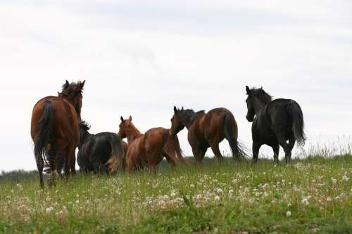 Horses Meadow Nature