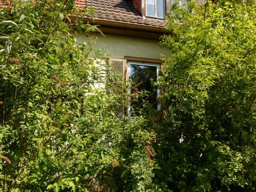 House Building Window Plant Haunting Trees Bush