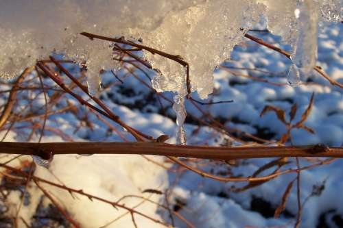 Ice Snow Winter Forest Tree Bush Cold