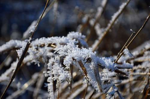 Ice Eiskristalle Ripe Hoarfrost Frost Cold Winter