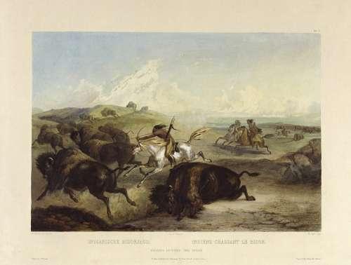 Indians Hunts Buffalo Bison Bueffeljagt Bisonjagt
