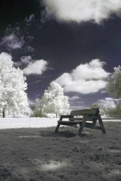 Infrared Nature Landscape Surreal Trees Filter