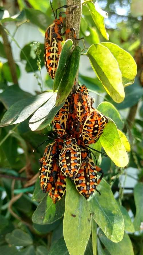 Insect Plant Animals Spring Nature