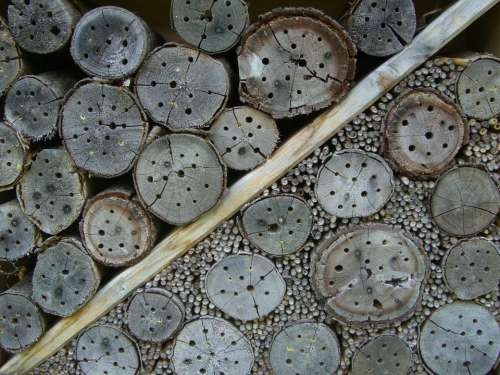 Insect Hotel Nesting Help Drill Holes Entry Openings