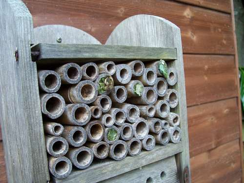 Insect House Leaf-Cutter Bees Mason Bees Leaf