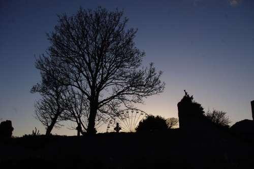 Ireland Shadow Tree