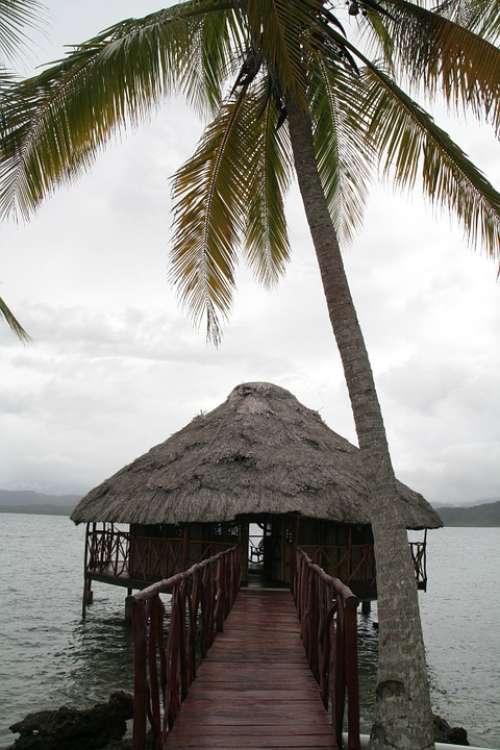 Island Cabin Caribbean Palm Tree