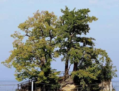 Island Trees Idyllic Lake Lake Constance