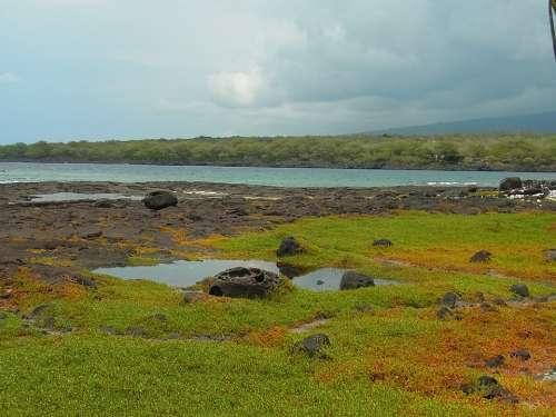 Island Of Hawaii Hawaii Sea Beach