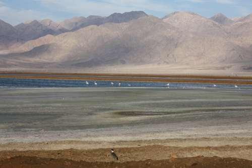 Israel Evrona Arava Flamingo Mountains Lake