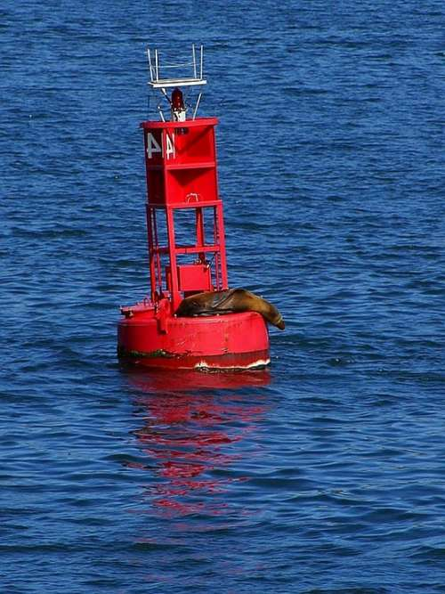It Seal Bay San Diego Bouy
