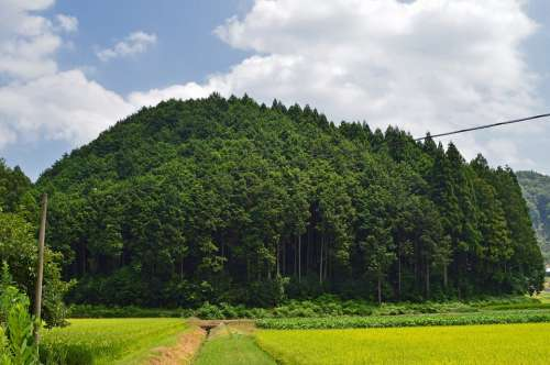 Japan Forest Trees Landscape Nature Outside