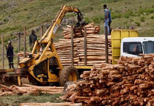 Job Work Logging Timber Wood Lumber Worker