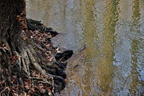 Joist Staříč Borovany River At The Mill