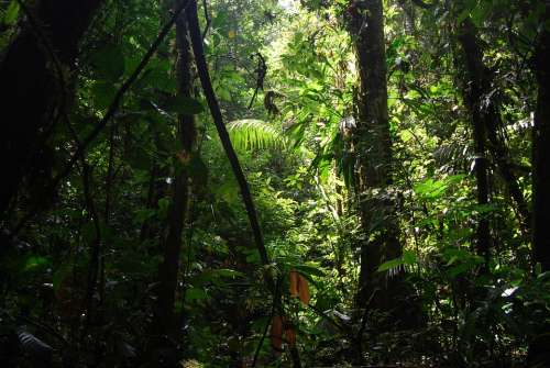 Jungle Ecuador Nature Green Beauty Trees Forest
