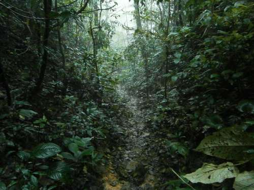 Jungle Rain Tropical Trail Hiking Rainforest