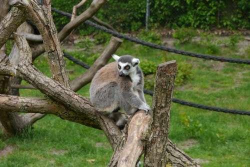 Kata Monkey Nature Africa Serengeti On Tree Trunk