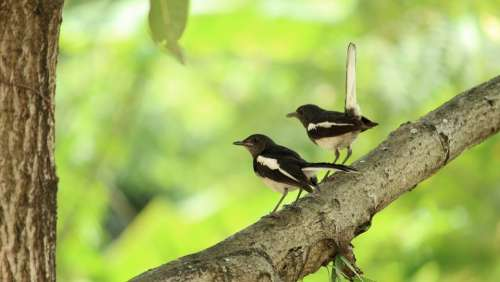 Kerala India Bird Avian Pair Mother Child Little
