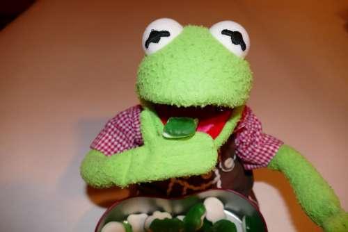 Kermit Frog Eat Gummibärchen Rubber Frogs Green