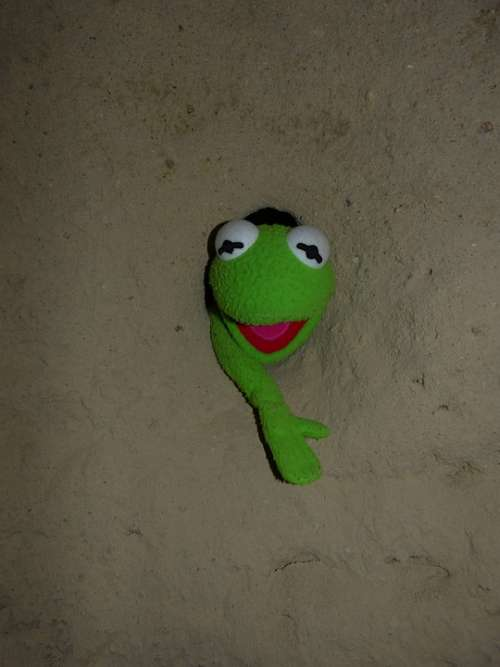 Kermit Frog Green Wall Hole Caught Stone Cold