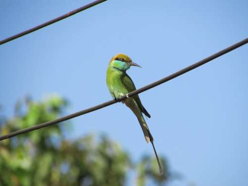 Kingfisher Bird Alcedo Atthis Small Green Exotic