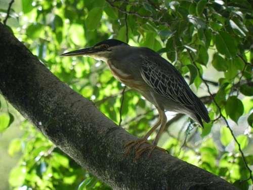 Kingfisher Animal Ave