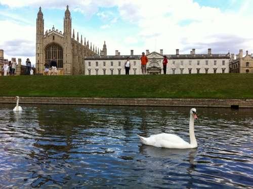 King'S College Cambridge Uk Swan Building England
