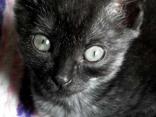 Kitten Cat Cat Eyes Little Pets Striped Funny