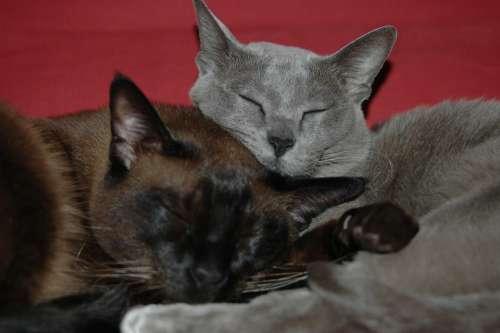 Kitten M Cat Animal Feline Are You Tired Of