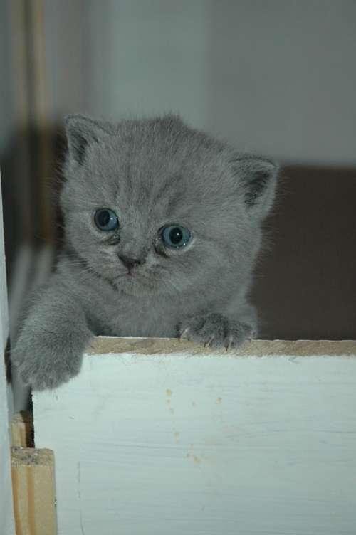 Kitten Cat Hangover Cats Animal Pet Mammal