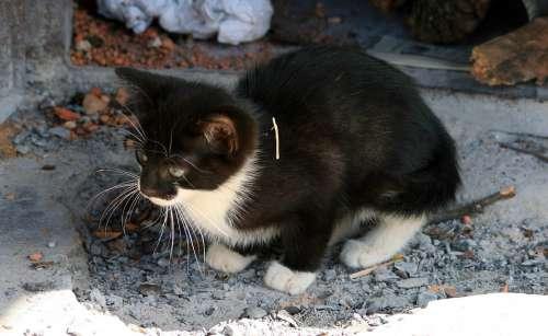 Kitten Small Cat Black White Timid Cute