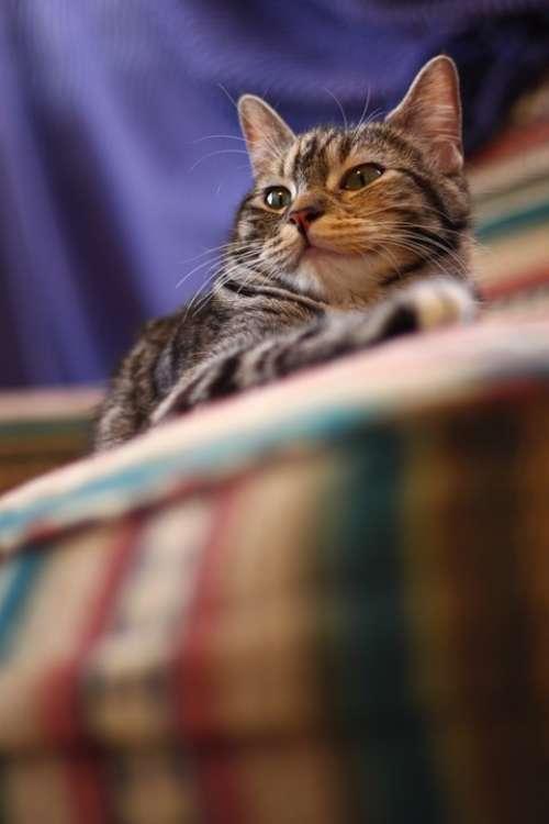 Kitten Gata Pet Animal Pets Animals Rest Siesta