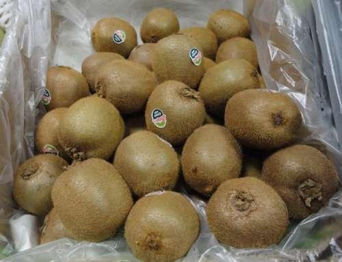 Kiwi Fruit Healthy Nutrition Fruity