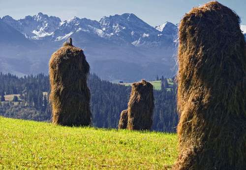 Kopki Hay Grass Skoszona Stacks Of Hay Sunny Work