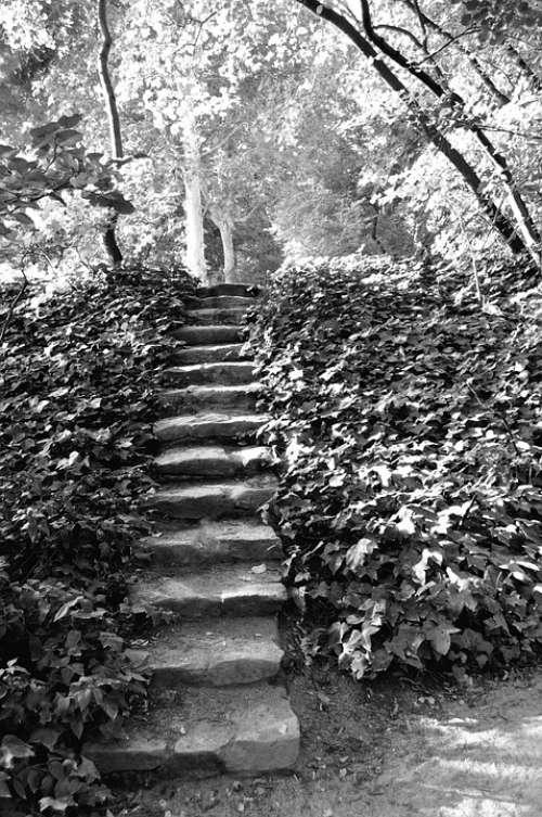 Ladder Park Rung