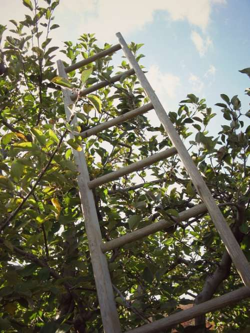 Ladder Apple Orchard Tree Sky Clouds Autumn