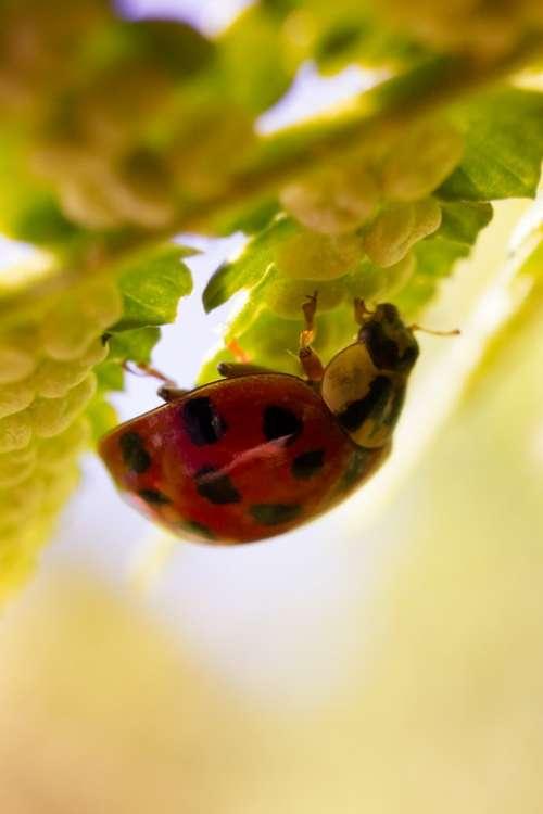 Ladybug Nature Macro Red