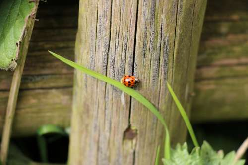Ladybug Plant Beetle Nature Insect Points