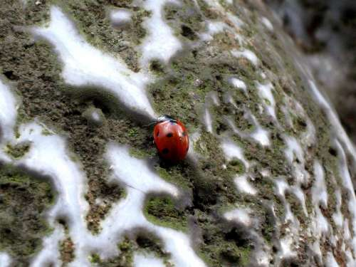 Ladybug Insect Dots Red