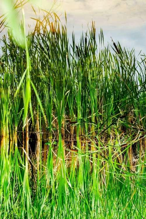 Lake Reflection Batons Vegetation
