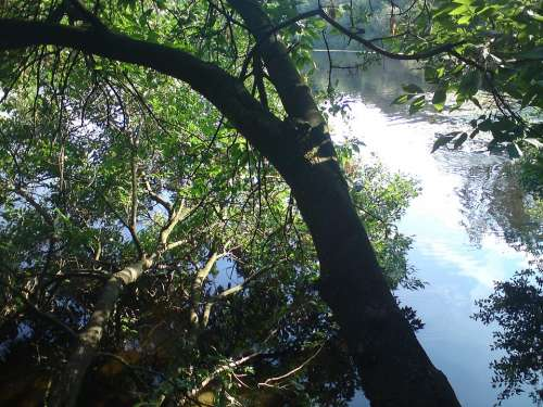 Lake Bank Tree Water Idyll